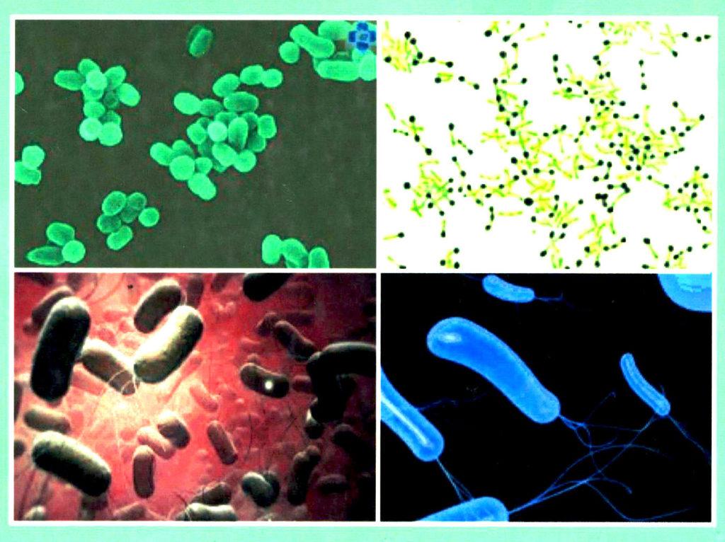 Бактериялар туралы мәлімет