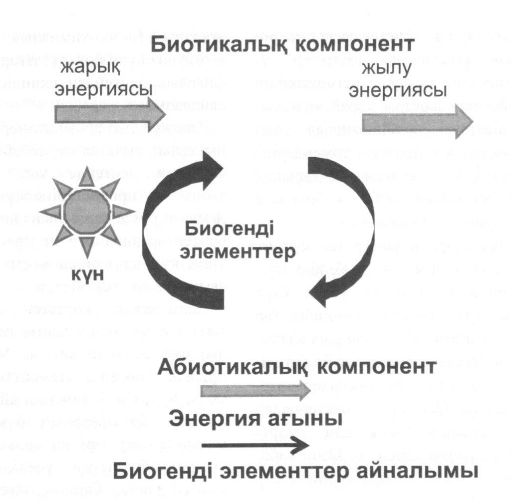 Энергия ағыны және биогенді элементтер айналымы
